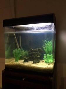 Fish tank Aqua Style 510 Wayville Unley Area Preview