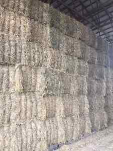 Horse and dairy hay for sale Cornwall Ontario image 4
