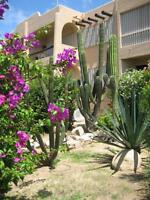 CABO SAN LUCAS BCS MEXICO-ECONO CONDO-VACATION RENTAL