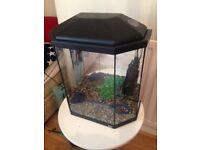 Rena hexagonal fish tank