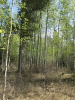 2 ACRE LOT IN ROCKY MOUNTAIN HOUSE