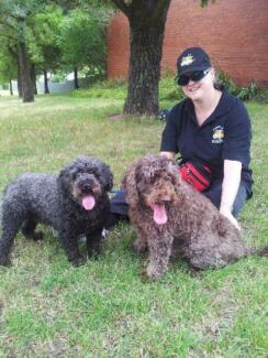 Fully insured Dog Walking service Hobart CBD Hobart City Preview