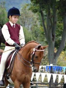 SHOWING, DRESSAGE, PONY CLUB?  Here is your pony! Doonan Noosa Area Preview
