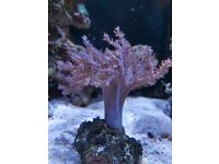 Corals, live rocks for marine tank/ aquarium must go till end of the weekend
