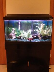 """Hagen"" 25-gallon tropical fish tank with black stand"