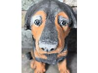 1 Stone Animal Rottweiler Guard Dog Puppy Garden Display Statue Ornament