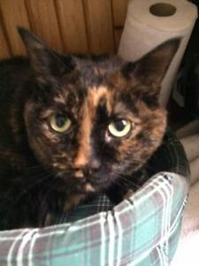 "Adult Female Cat - Tortoiseshell: ""Pinky"""