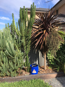FREE Tall Cactus Plant Panania Bankstown Area Preview