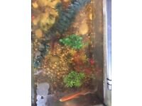 2 Gold fish for sale with tank and accessories