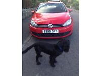 VW GOLF, great car reduced price for quick sale