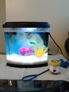 fish tank with 2 bettas has a devider to seperate