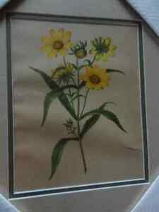 10 Vintage Botanical Prints- Pro Framing & Matting London Ontario image 6