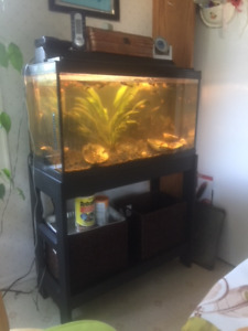 Fish tank. Aquarium. 20 gal / 75 letters with Stand and fish