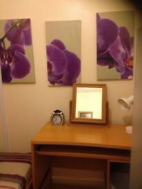 Single Room in family House £275