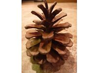 Fir Cones for Christmas Crafts