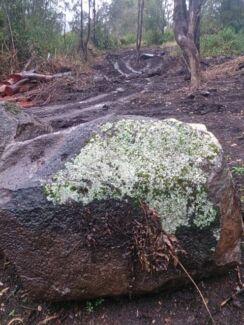 premium mossy bush rock $1100 Caboolture Area Preview