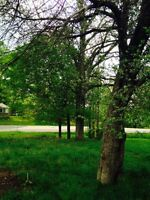 Beautiful Lush Country Building Lot For Sale Incl Well & Septic