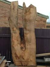 Mango Timber Slabs for sale Maroochydore Maroochydore Area Preview