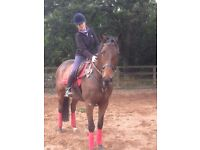 Available- Capable equestrian adult rider for ponies/small horses