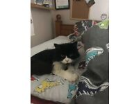 Cat needs loving home