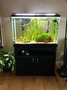 45 Gallon Fish Tank