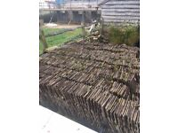 Roof tiles free to collector!!!