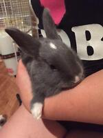 "Baby Male Rabbit - Dutch: ""Jubjub"""
