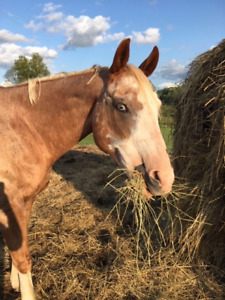 2 Horses Available for Lease!