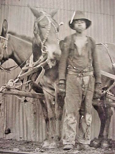 African American 1890 1900 Photograph Of Young Black Mine Worker Wagon Mule Team