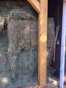 Large square hay bales (4x4x8ft)