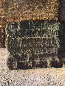 Hay!!  Beefman's Special