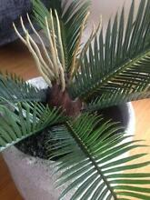 Faux Cycad Plant *FREE Northern Beaches Delivery* rrp $99 Narraweena Manly Area Preview