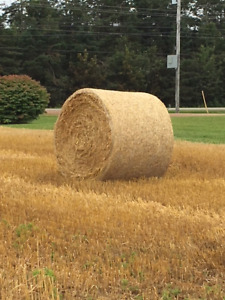 Straw: Large Round Bales,  Large Square Bales for Sale