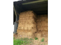 150 Bales Of This Years Hay. £3 Per Bale. Collection Only