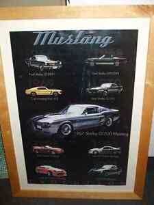 Mustang photo ( Collection )