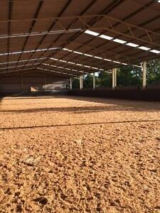 AGISTMENT - First class equestrian facilities - Arcadia NSW Arcadia Hornsby Area Preview