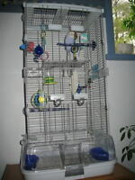 Bird Cage Vision with Accessories