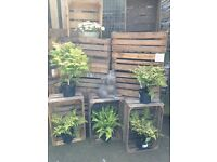 "Vintage wooden fruit crate x1 Approx. 9"" x 14"" x 24"" £6 each"