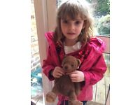 Lost Teddy Bear - Please let us know if you find a brown teddy bear lost in the Richmond area