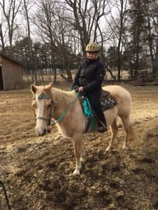 Horses for summer leases