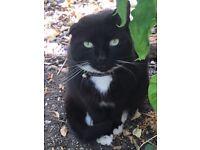 Cat - loving home needed - free