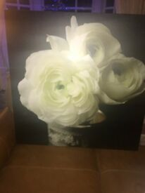 Next White Roses Canvas Picture Excellent Condition