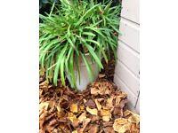 Five Large Pot Plants With Plants For Sale