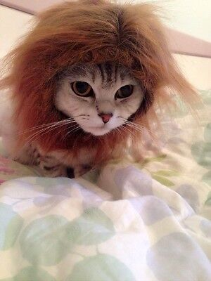 Make A Lion Costume (Cat dress up - Lion Mane Wig - Cute Costume that makes your cat look like a)