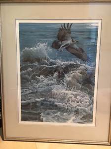 Ron Parker - Above The Breakers Osprey