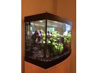 Fluval Valencia 180 Fish Tank with heater, filter and lights with Oak unit