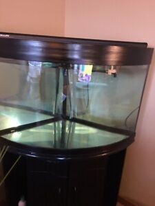 Beautiful 55 gallon corner tank/aquarium
