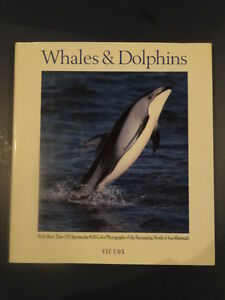 Whales and Dolphins Kitchener / Waterloo Kitchener Area image 1