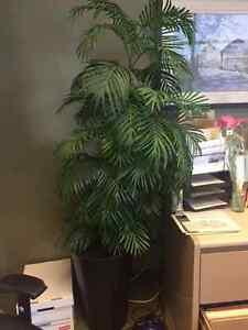 Artificial (faux) plants London Ontario image 4