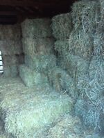 Small Square Hay - Excellent Quality